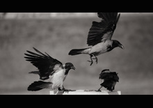 http://prometej-photo.ru/preview/animals/-IMG_0613.jpg