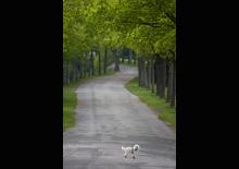 http://prometej-photo.ru/preview/animals/-IMG_1382_Bielefeld.jpg