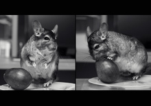 http://prometej-photo.ru/preview/animals/-IMG_1741_1.jpg