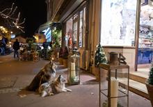 http://prometej-photo.ru/preview/animals/-IMG_3559_Paris.jpg