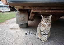 http://prometej-photo.ru/preview/animals/-IMG_4291_Saransk.jpg