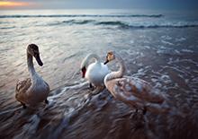 http://prometej-photo.ru/preview/animals/-IMG_7492_Kaliningrad.jpg