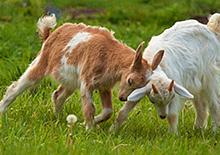 http://prometej-photo.ru/preview/animals/72288804.jpg