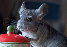 http://prometej-photo.ru/preview/animals/73012083.jpg